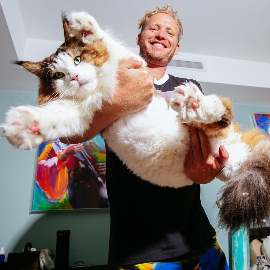 Samson Aka Catstradamus The Largest Cat In New York City And The Dj Human Who Shares His Space Cats Large Cats Pets Cats