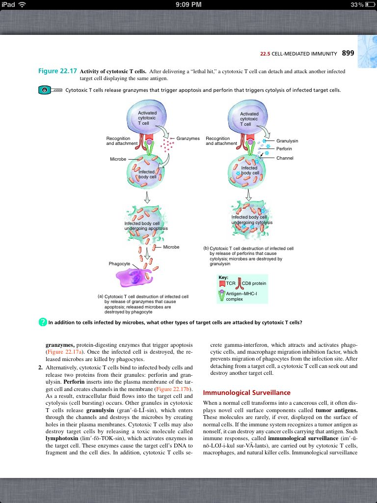 Principles of Anatomy and Physiology, Chapter 22, The Lymphatic ...