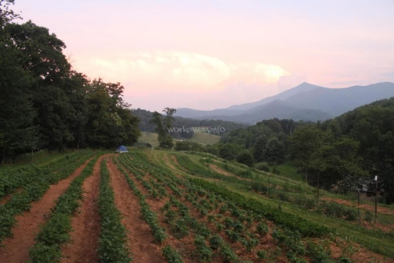 A music and art based eco-village in the Blue Ridge Mountains - workaway.info