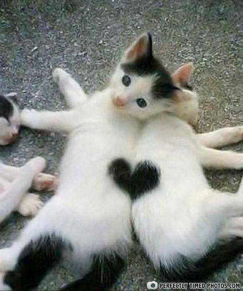 http://gissu.hostedgalleries.me/pranks-youll-love  cat heart