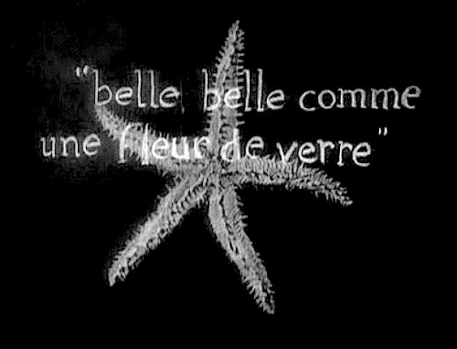 Invitation De Mariage Avec étoile De Mer Couronne Et Fleur