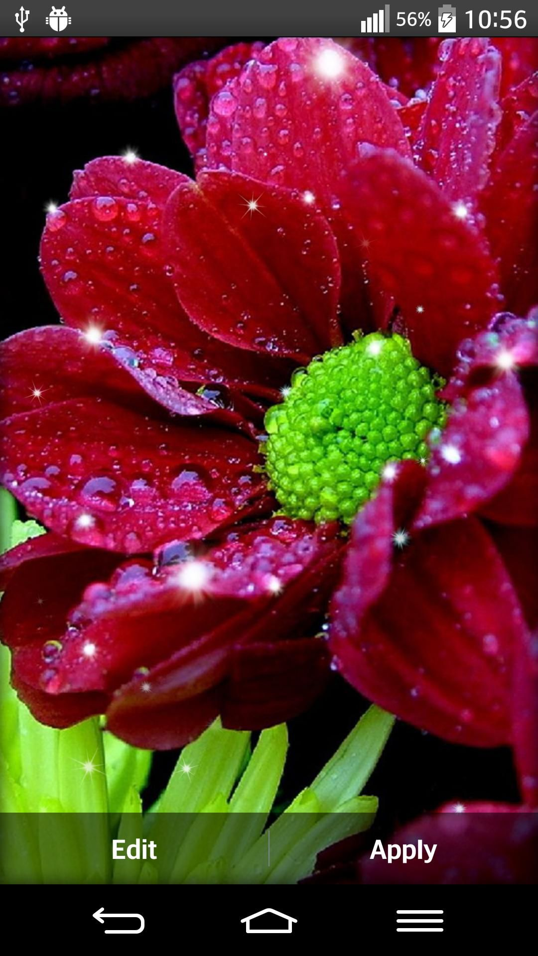Pin On Wallpapers Flowers Fantastic live flower wallpaper
