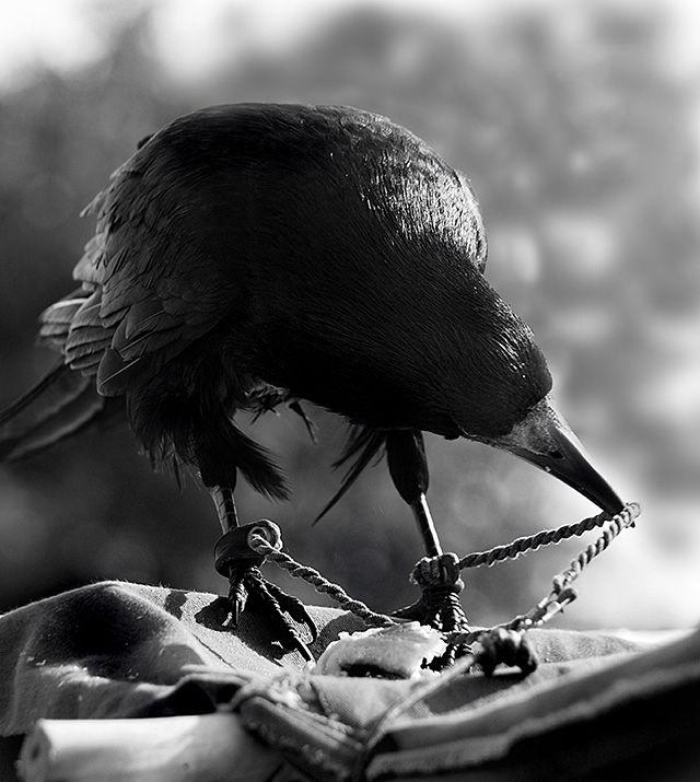 Понедельник работу, картинки прикольные ворона