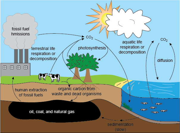 The Carbon Cycle Shmoop Biology Carbon Cycle Science Photosynthesis