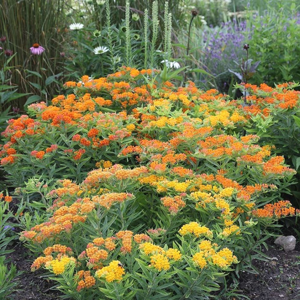 New home garden  new home landscaping ideas homelandscaping  Home Landscaping