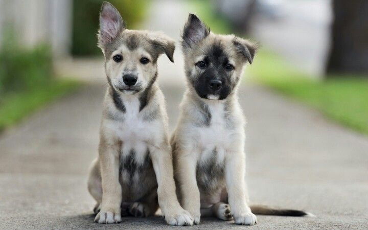 I want deese dogges