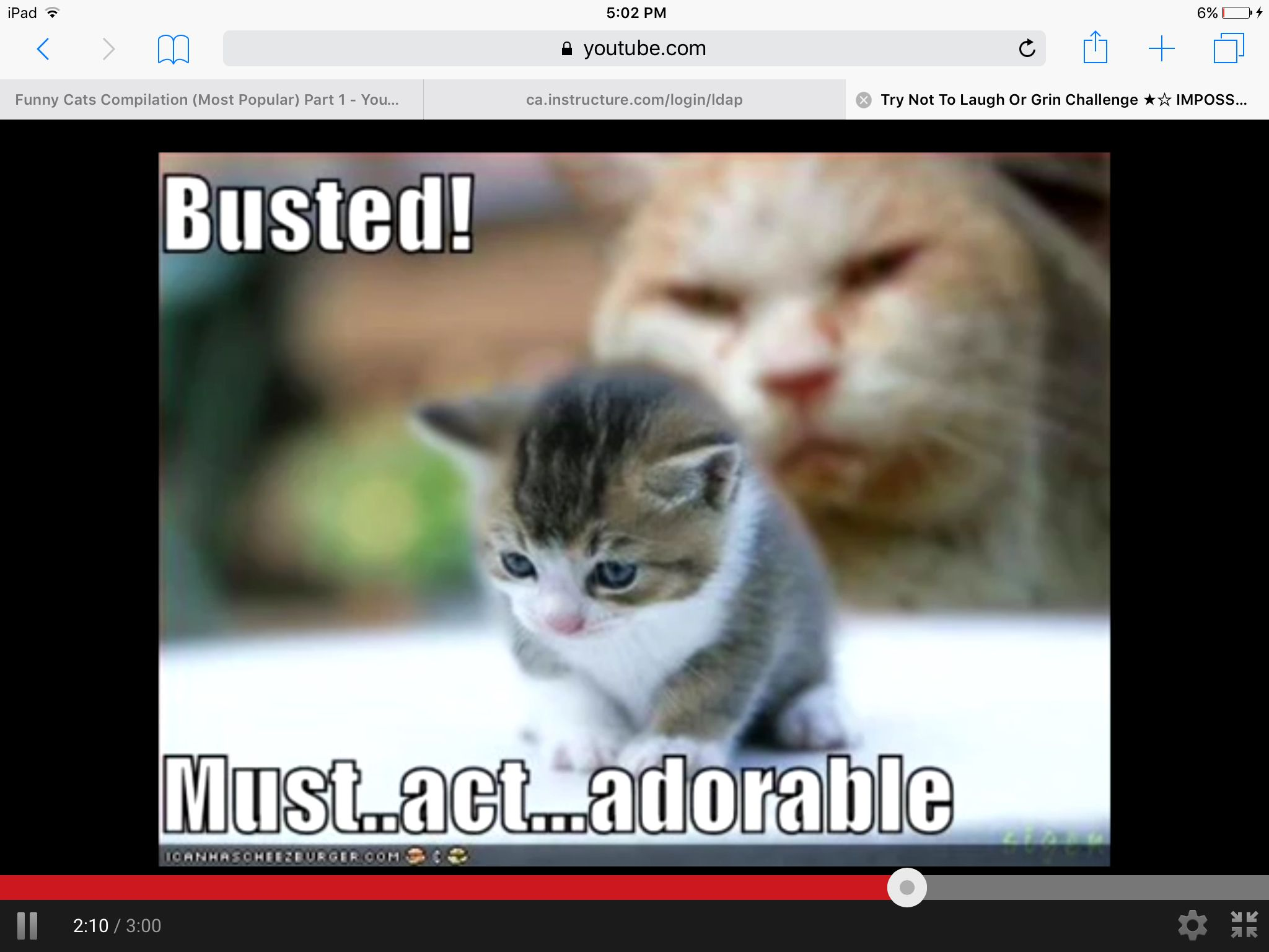 Pin by Kaitlyn McMichael on Funny cats (With images