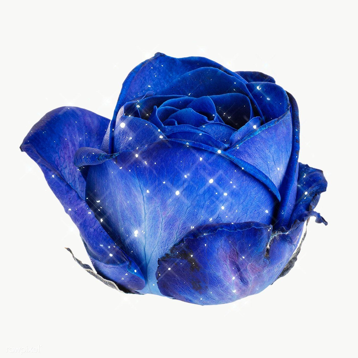 Sparkling Blue Rose Flower Design Element Free Image By Rawpixel Com Manotang Blue Flower Png Blue Rose Rose Flower