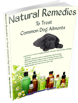 Dog Yeast Infection Paw Vinegar