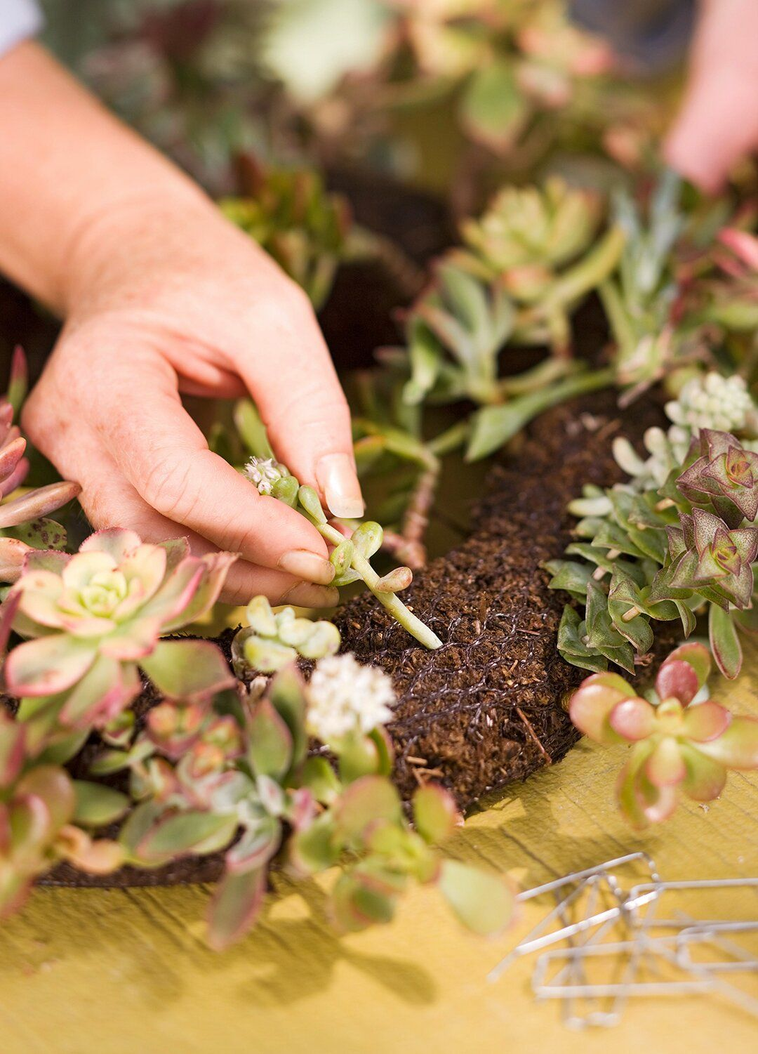 Photo of This DIY Succulent Wreath Will Add Color and Life to Your Home