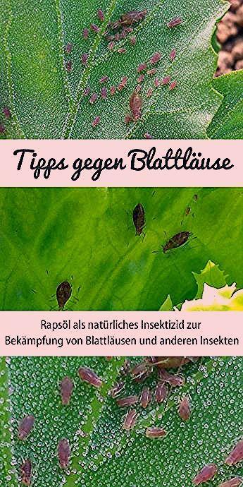 Photo of Gemüse Im Garten Pflanzen