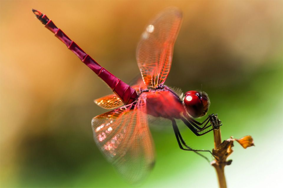 pink dragonfly photo | One Big Photo