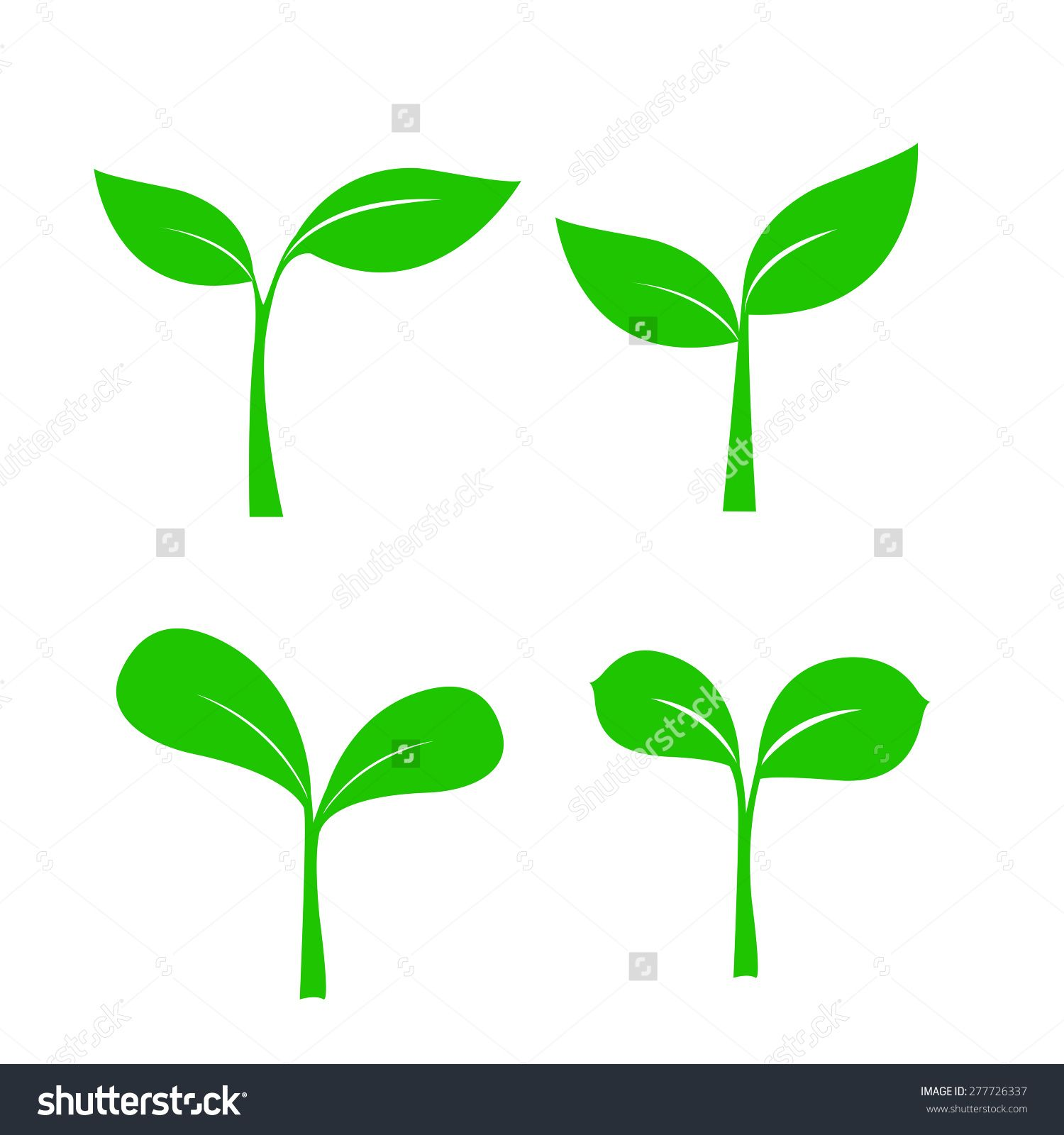 Set Of Small Shoot Plant Leaf For Nature Hydroponic Design Vector