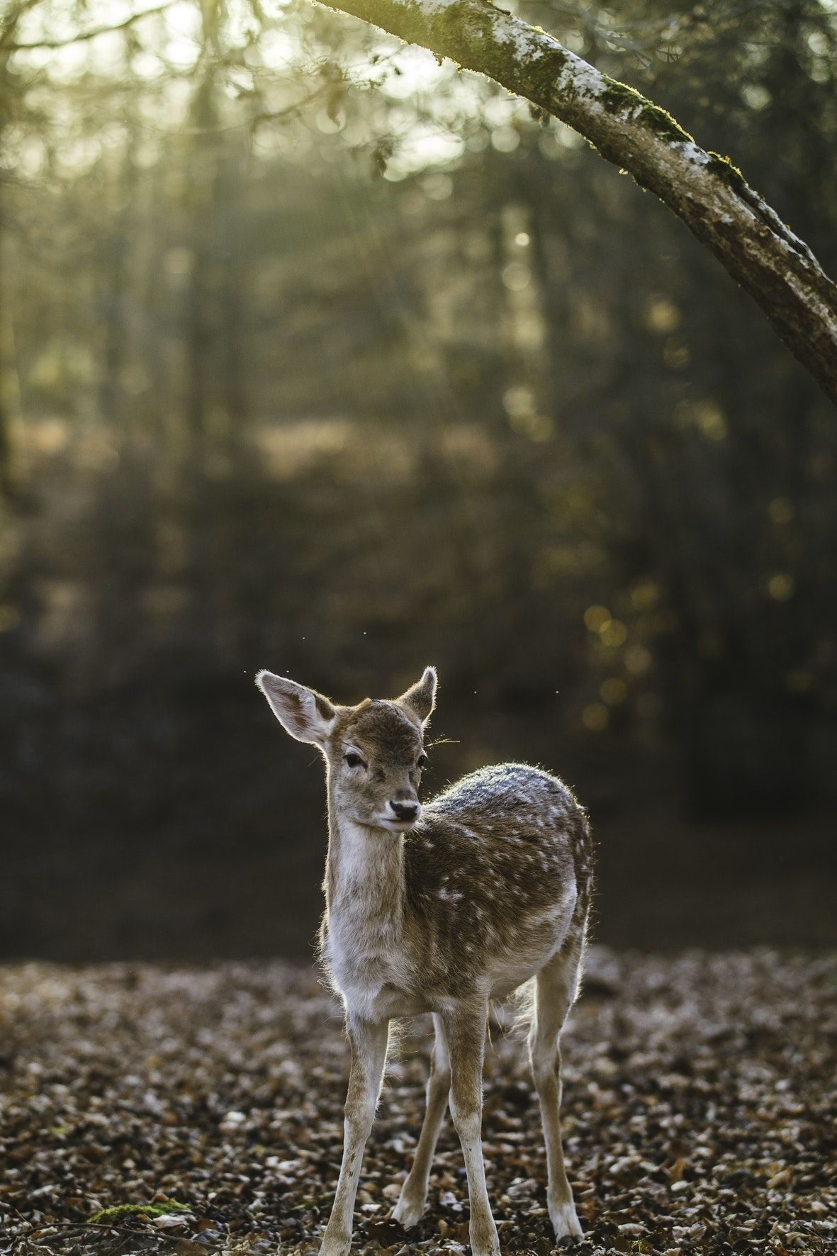 By E+N Photographies (Unsplash) Forest pictures, Forest