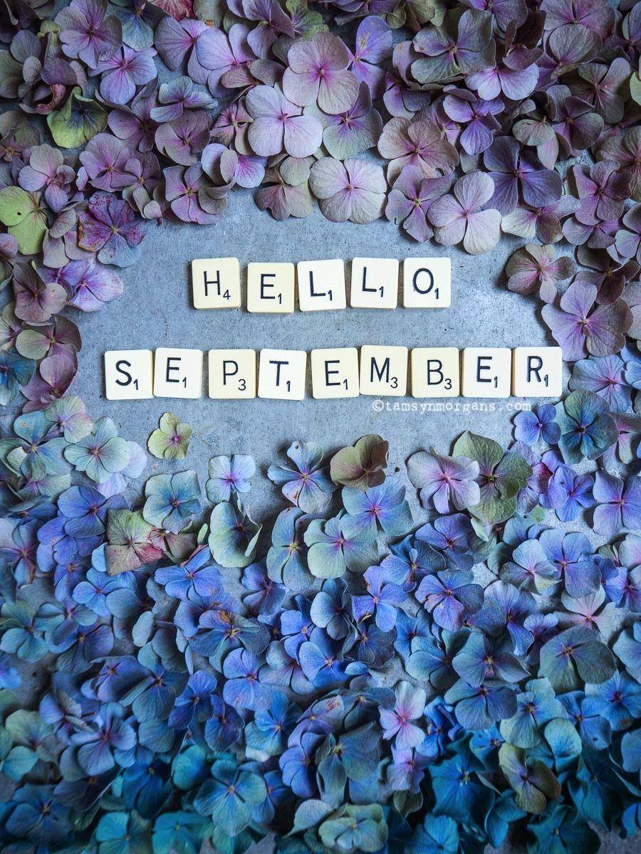 Tamsyn Morgans | Hello September!