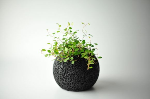 The ÒEco-pochiÓ indoor plants add style to your home and remove stinky smells, too! http://en.rocketnews24.com/2016/06/03/eco-pochi-indoor-plants-will-add-style-to-your-home-and-remove-stinky-smells-too/