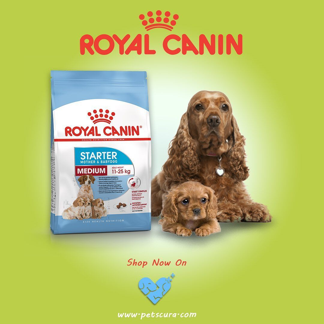 In Stock Petscura Royalcanin Medium Puppy Dry Dog Food Avail Discounts On This Product Provide Your Pet With Labrador Puppy Dry Dog Food Dog Food Recipes