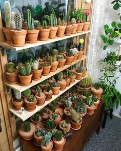 Photo of Cómo conseguir una colección de cactus envidiable | Plantas