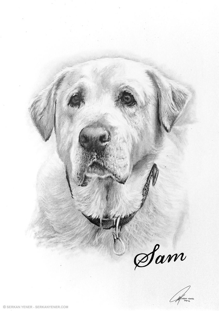 Pencil sketch of dog pencil drawing of dogs drawings of dog