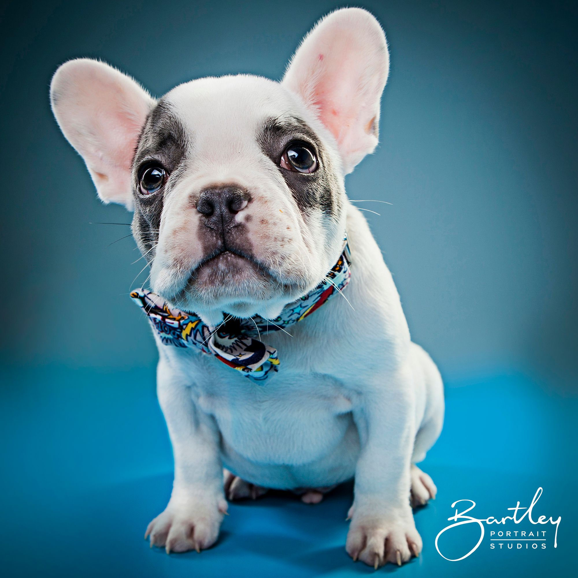 Look At This Cutie Patootie Puppy Dog Portrait Photography