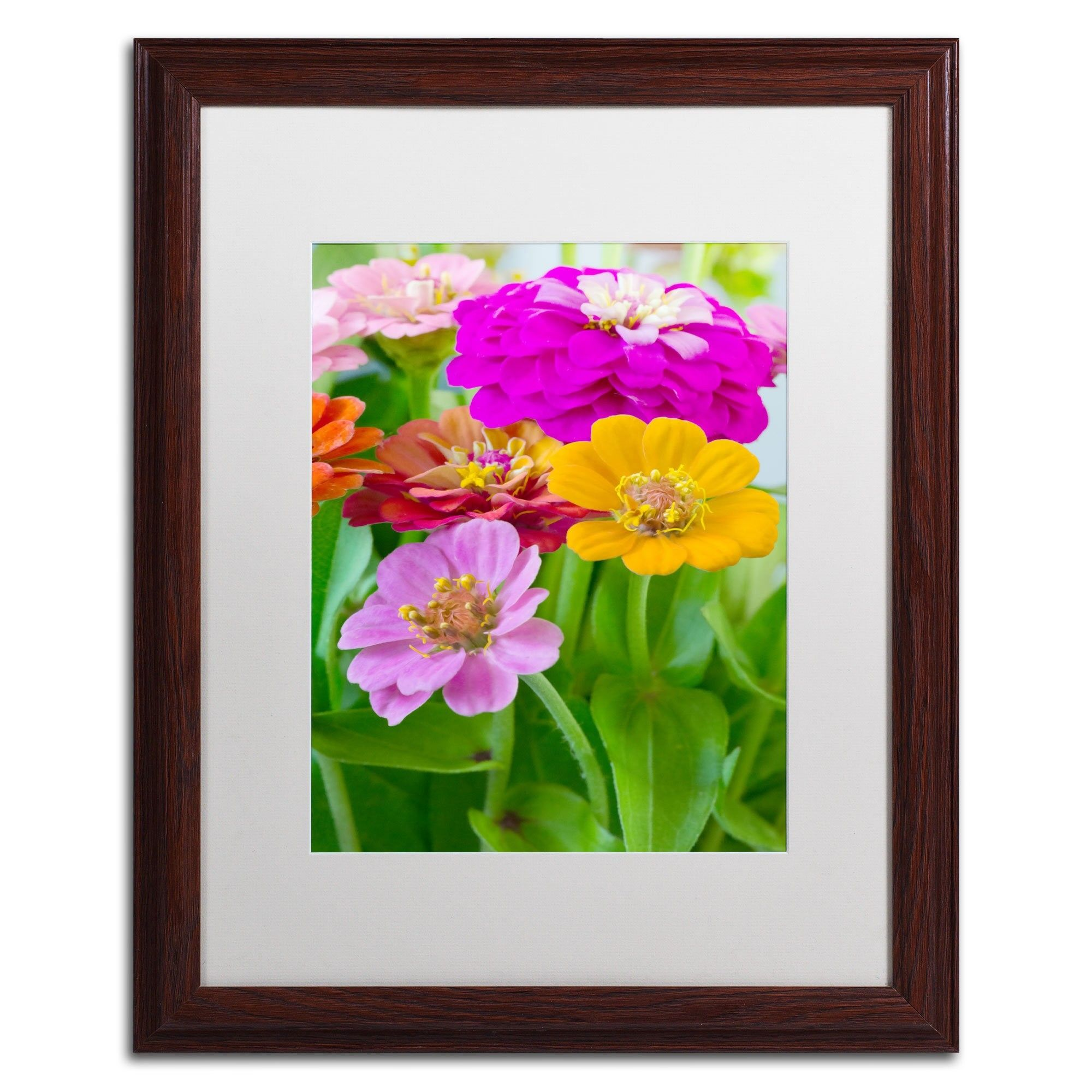 Pastel Puzzle by Philippe Sainte-Laudy Matted Framed Photographic Print