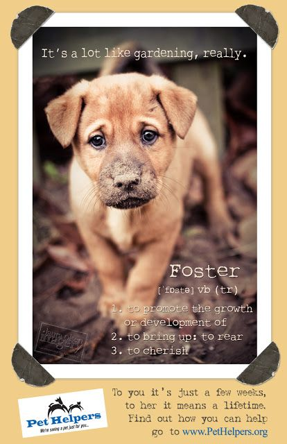 Adopt A Friend Persuasive Pet Posters Pet Helpers Lost Cat Poster Pets