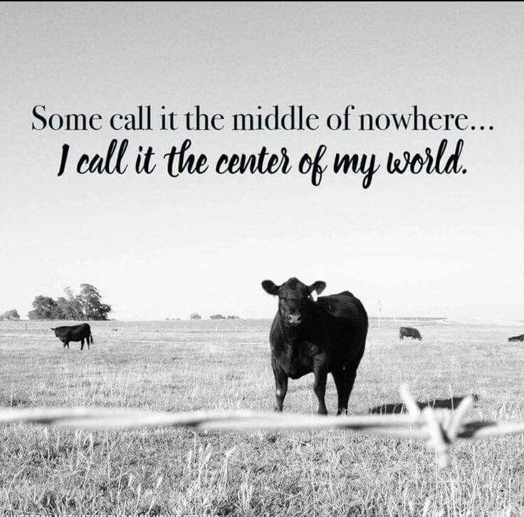 Pin By Andrea On Farm Life Cow Quotes Country Girl Quotes