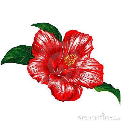 Hibiscus Flower Puerto Rico Flowers Hibiscus Flowers Hibiscus