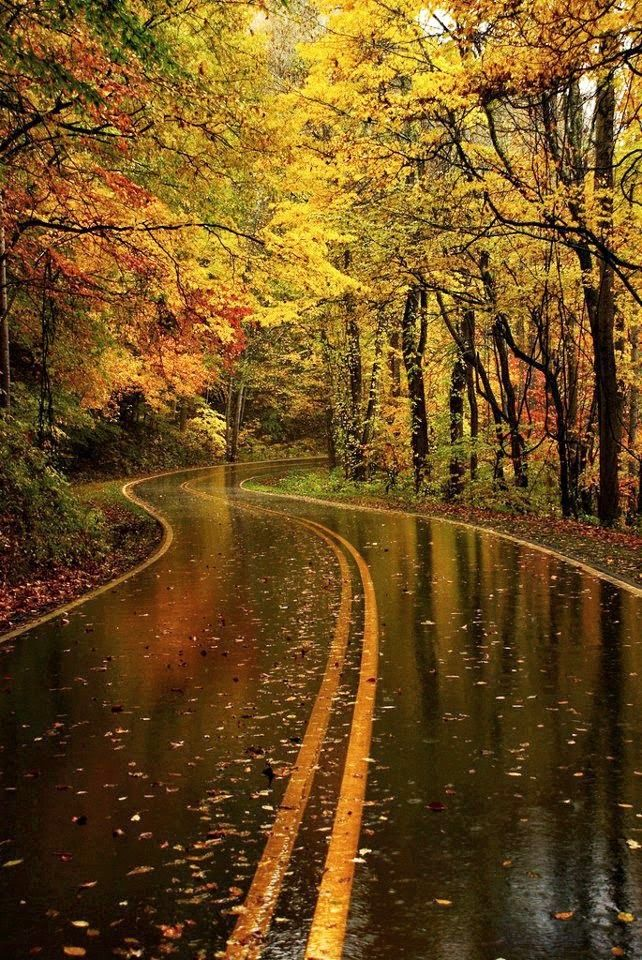 After A Good Rain Yellow Leaf Road North Carolina Photos