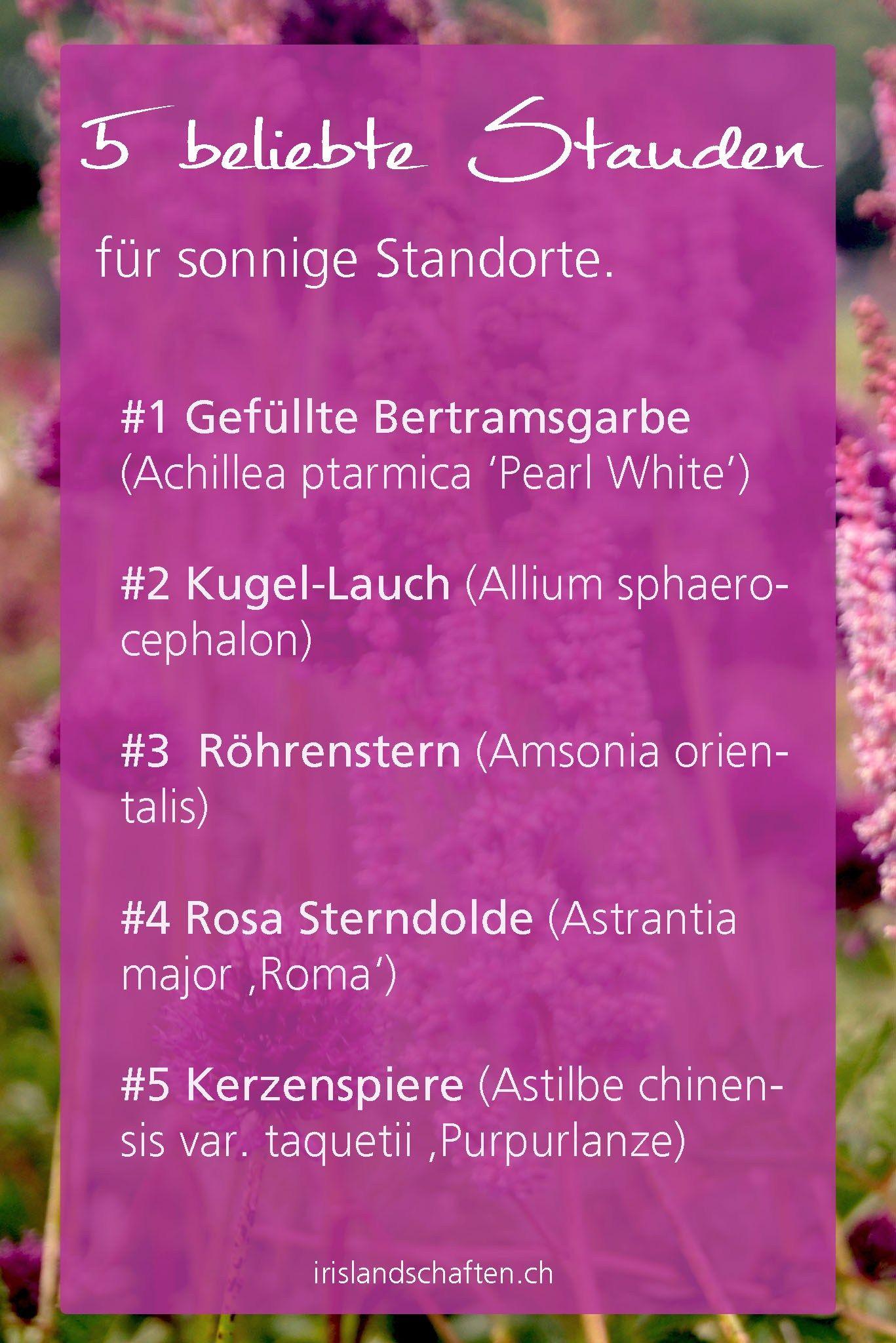 Pflanzen Für Sonnige Standorte Efeutute Epipremnum Pinnatum