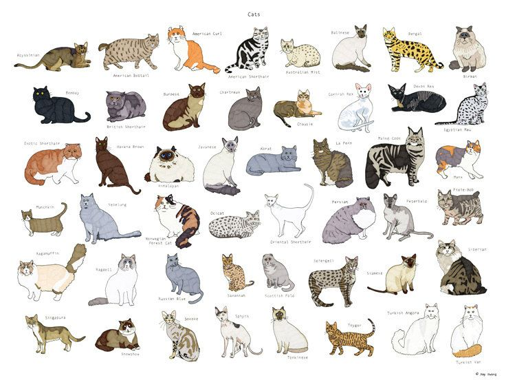 Cat Breeds Poster 18x24 By Amyhwangshop On Etsy Cat Breeds Cat Breeds Chart American Bobtail Cat