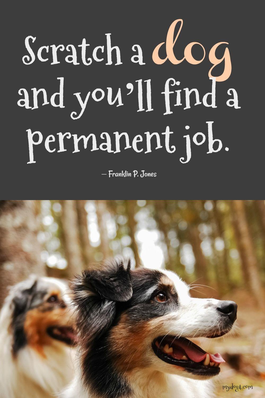 Dog Quote Dog quotes, Dog quotes love, Dog advice