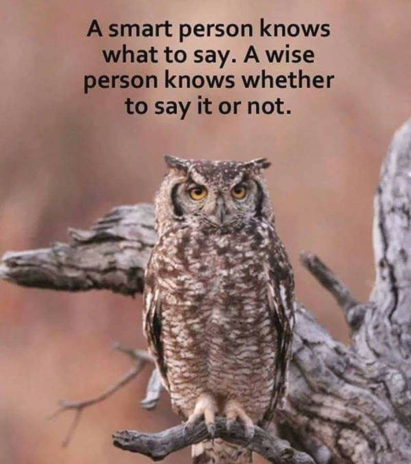 Be an owl   Cool words, Owl, Life