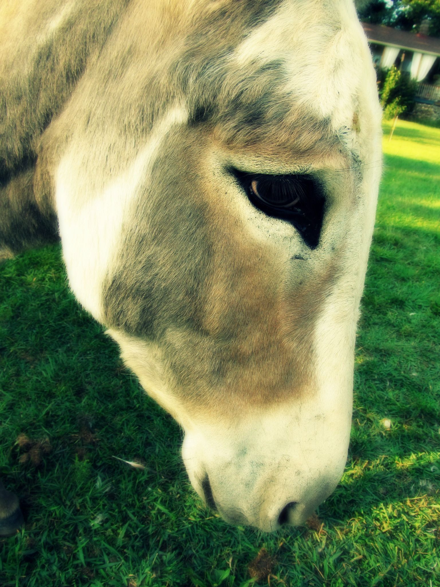 Donkey eyes are even sweeter than horse eyes. And that is really ...