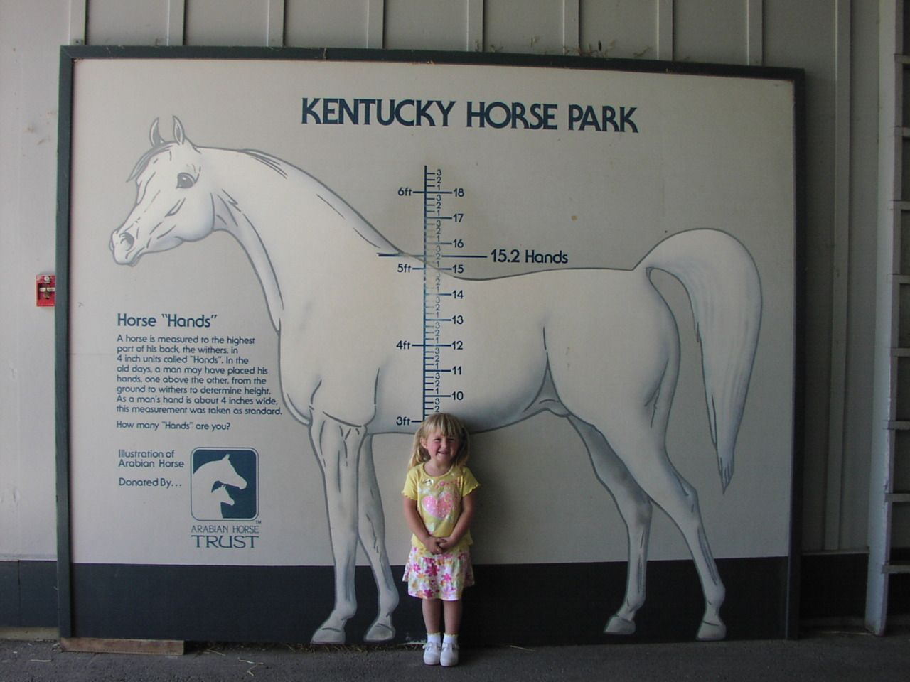 Pin On Equine Other Info