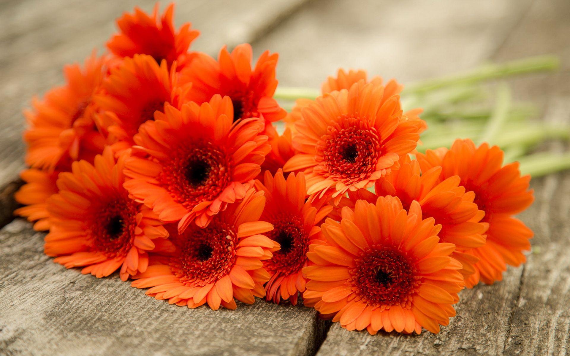 Картинки цветы герберы красивые, днем рождения майские