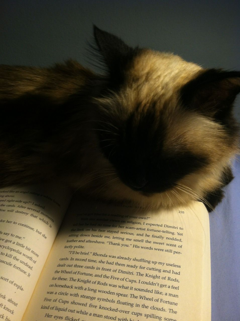 Missgeburt Cats Will Do Anything To Stop You From Reading Cats Books Animals