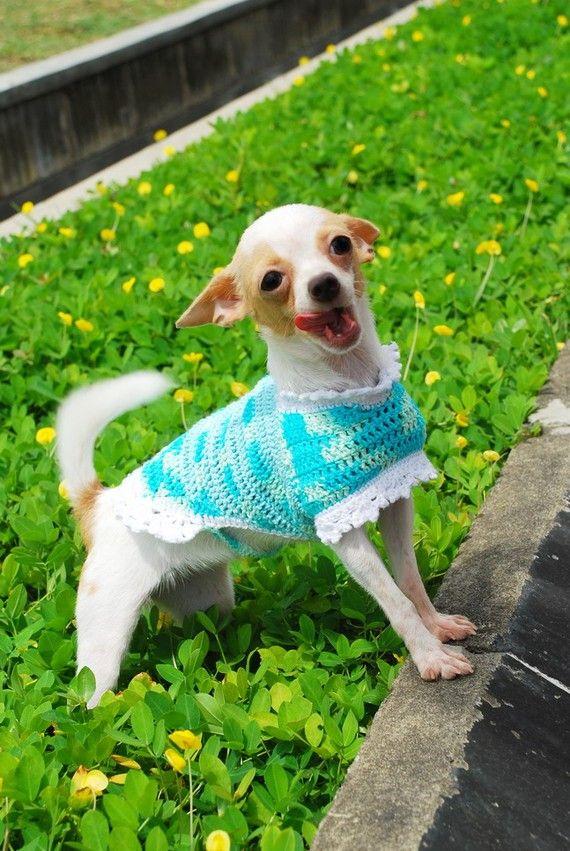 afb40be8f Dog Dress Hand Crochet Clothes Robin Egg Blue Pets knit by myknitt
