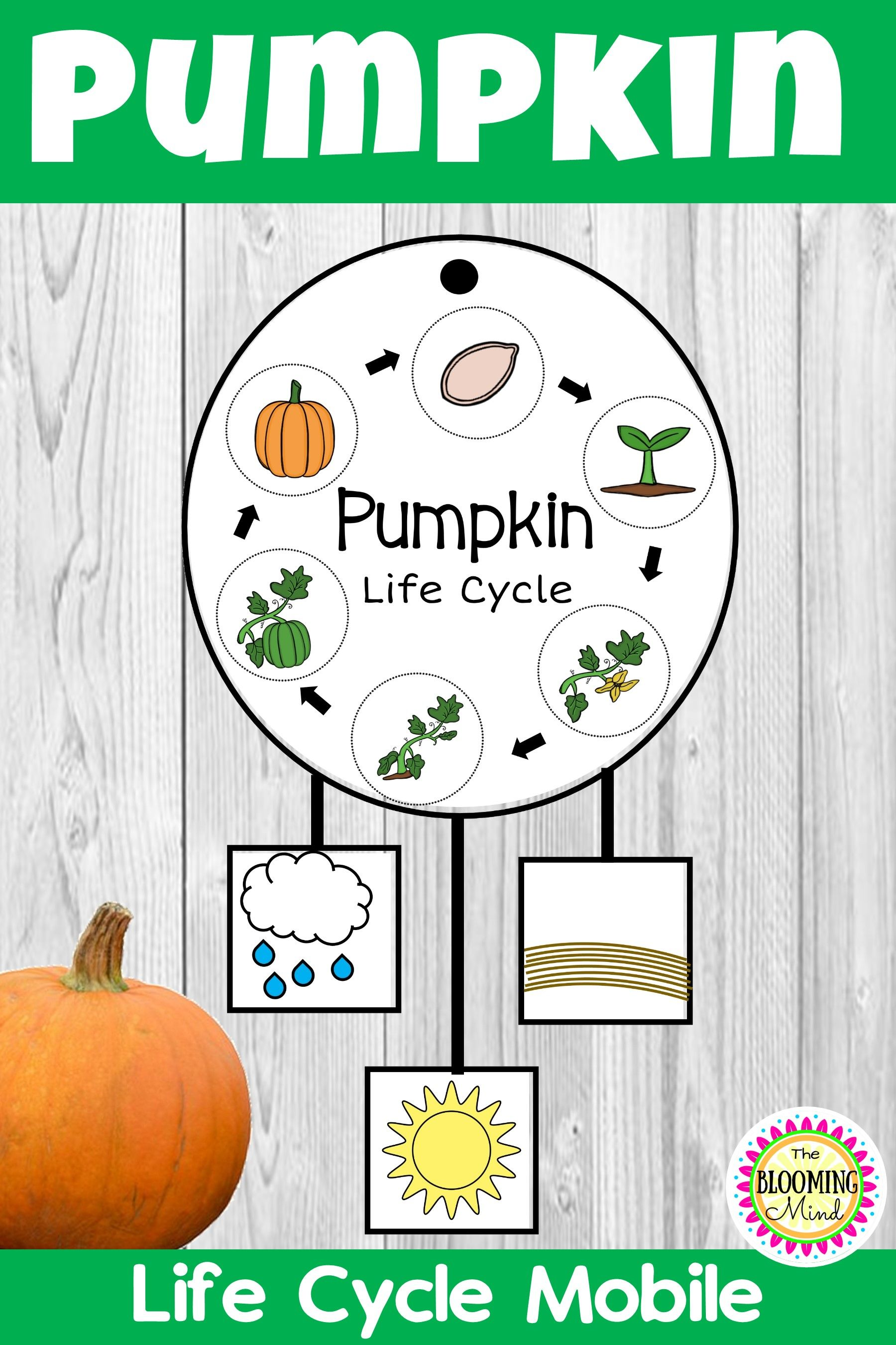 Pumpkin Life Cycle Activity (With images) Pumpkin life