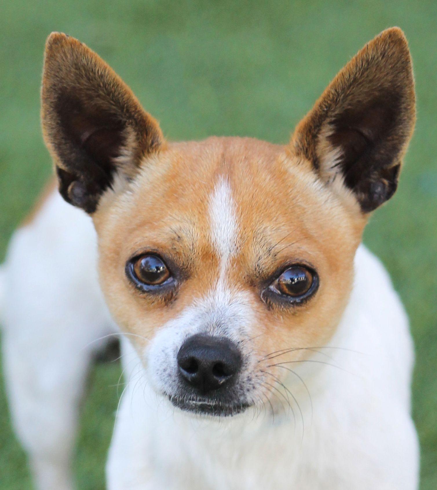 Pin by San Antonio Humane Society on SAHS Dogs Cute