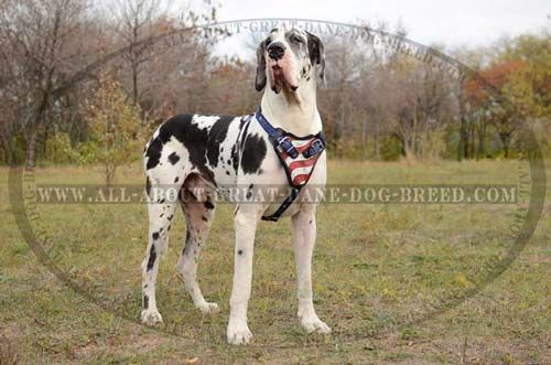 H1ap 1094 Painted Leather Harness American Pride Dane Dog