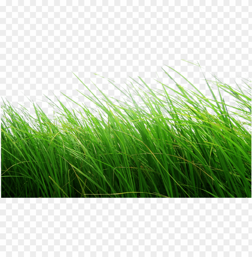 Grass Transparent Background Png Image With Transparent Background Png Free Png Images In 2020 Light Background Images Transparent Background Dslr Background Images