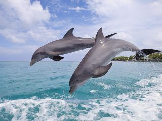 We have worked on dolphin wide hd free wallpaper