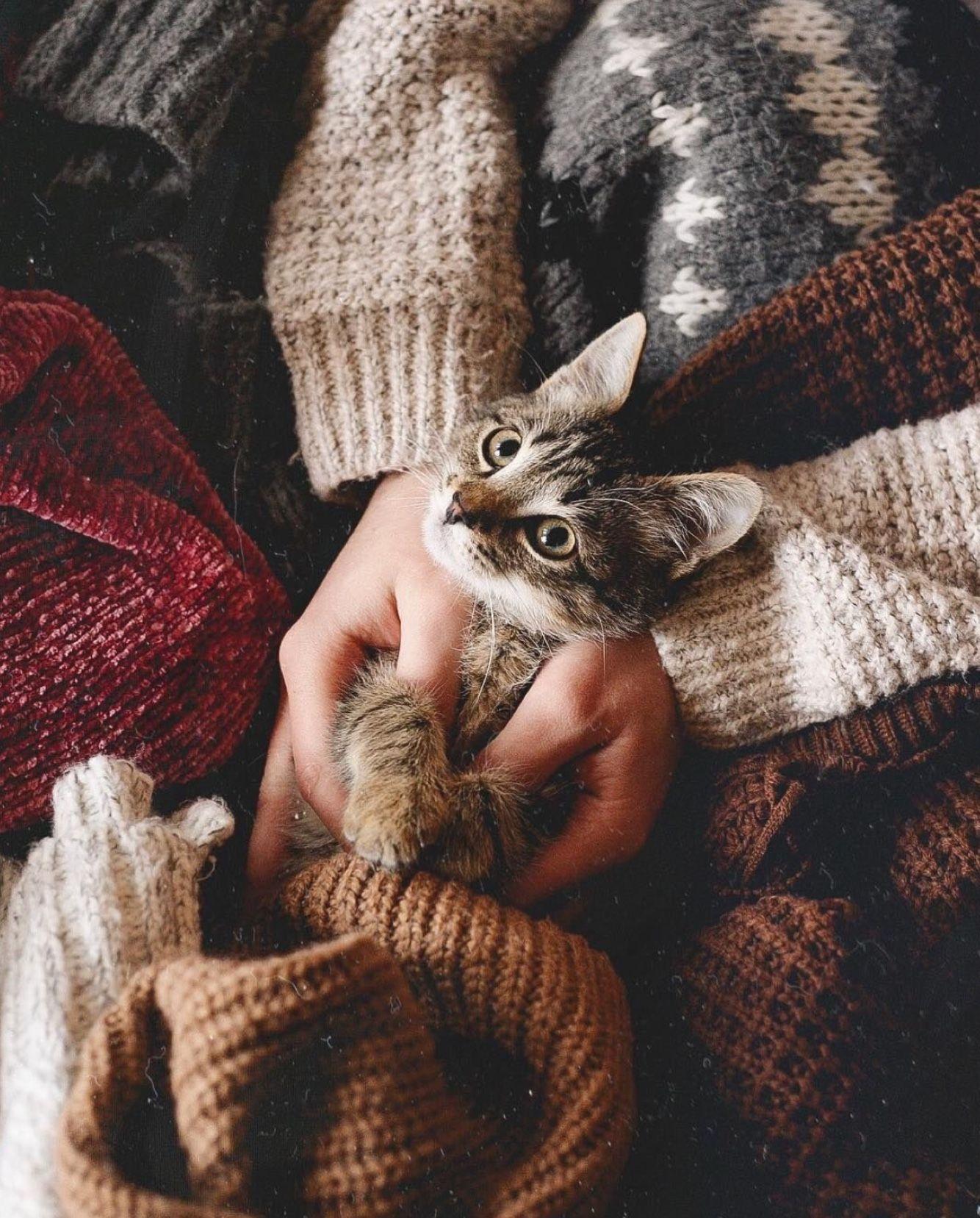Pin By Aivija Gritane On K I T T E N Animals Cute Animals Cat Love