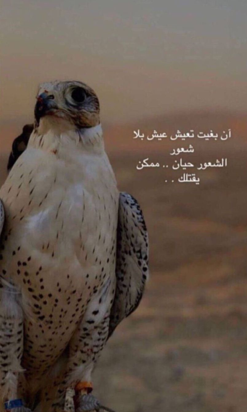 Pin By Ll0v2s On My Saves In 2020 Love Quotes Funny Beautiful Arabic Words Quran Quotes Inspirational