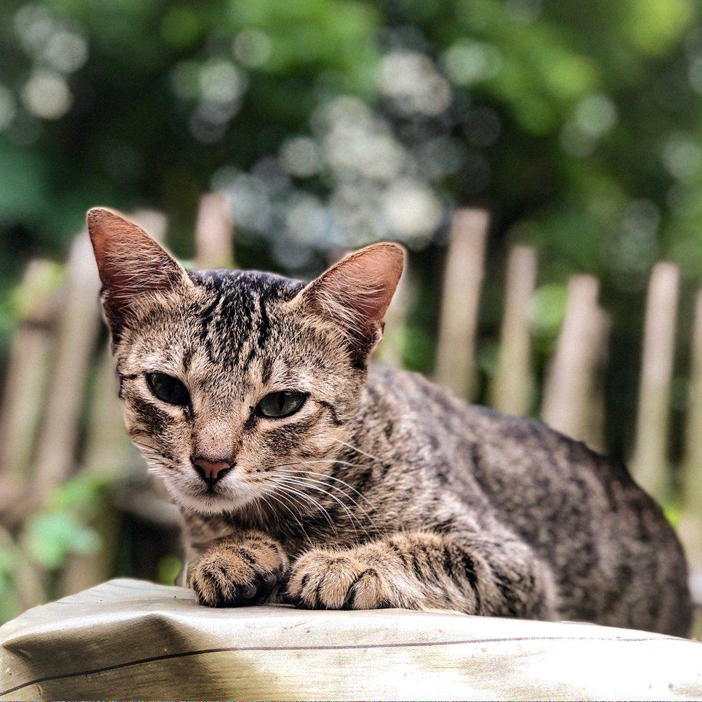 Cat Adoption, Why Do Cats Purr