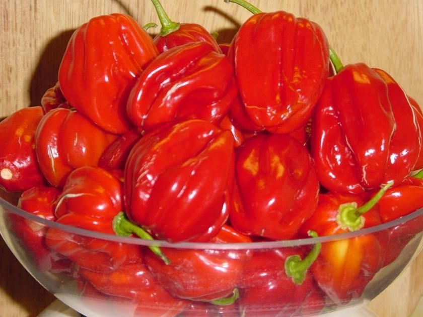 recipe: how many habaneros in a pound [30]