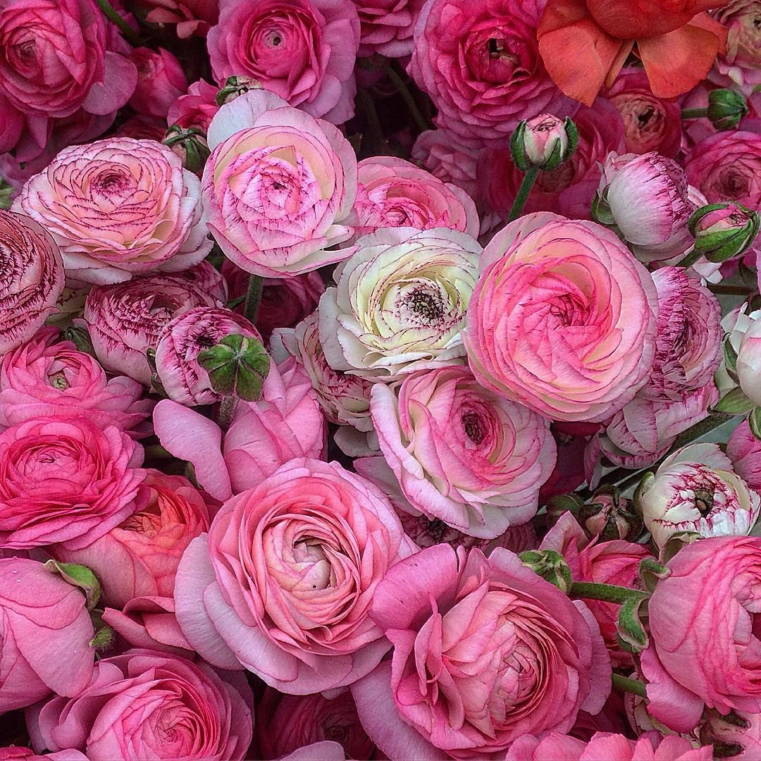 Instagram flower farm flowers