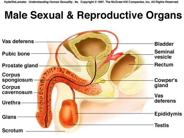 Pin By Cheri Dennen On Biology Pinterest Reproductive System
