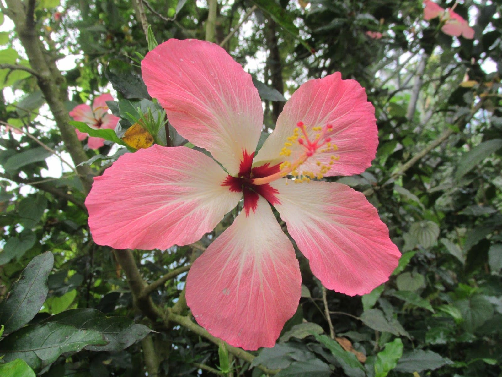 Exotic rainforest flowers google search 15ss pinterest flowers exotic rainforest flowers google search izmirmasajfo Gallery
